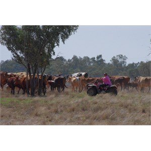 MUSTERING ON THE TOWN COMMON
