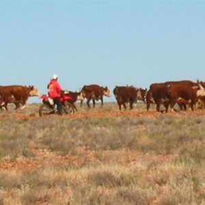 Hamilton Station, Cattle Station & Outback Camping