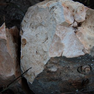 More shell remnants in the karst