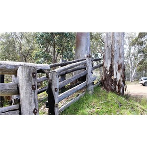 Innovative cattle loading shute