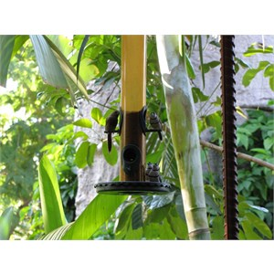 Bird feeder at cafe