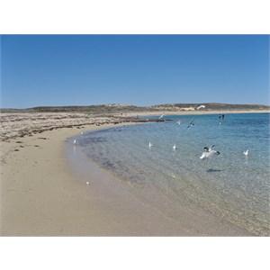 Beach at Pt. Quobba