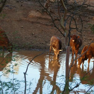 We sat quietly as the cattle came to drink