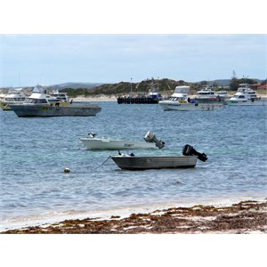 The Lancelin crayfishing fleet.
