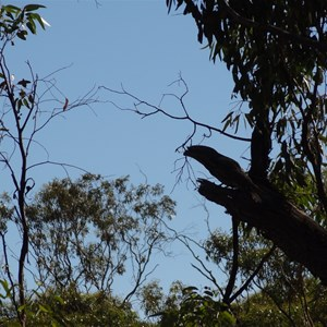 One of the Local native birds