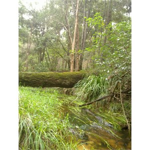 Gibberagee State Forest