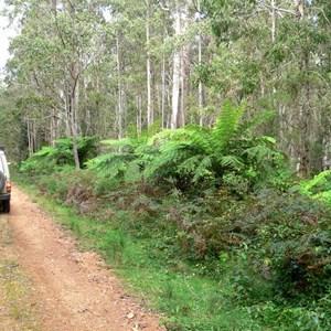 Track in Werrikimbe NP