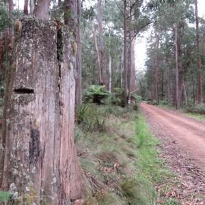 Stump across road from campsite