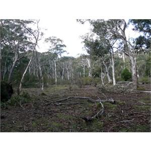 Badja Swamps