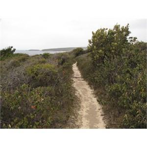 Track through the heath