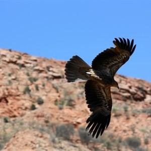 birds of prey show activist