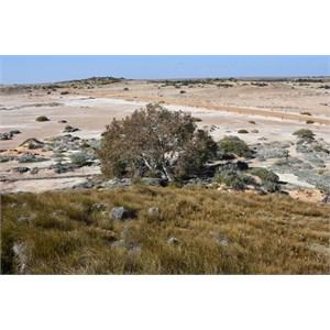 Wabma Kadarbu Mound Springs Conservation Park
