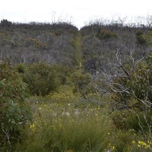 Ravine Des Casoars Wilderness Area