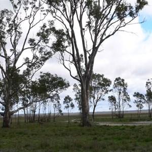 Lake Albacutya, 2005