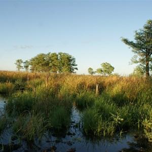 Dragon Tree Soak - main water (swamp) area