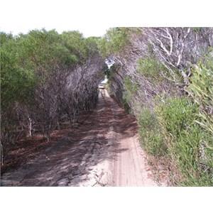 Hammersley Beach track