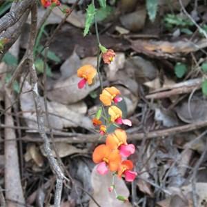 Wild Flowers October 2012