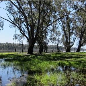 Barmah Lake