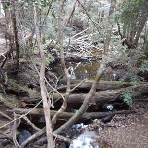 Forth River - Overland Track