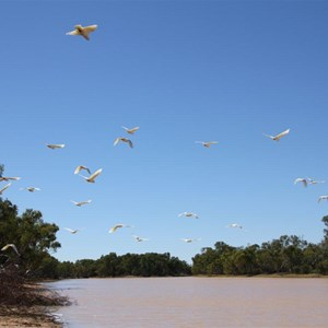 Corellas over Stretch Lagoon