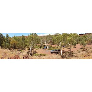 Kalgan Creek - The track has disappeared