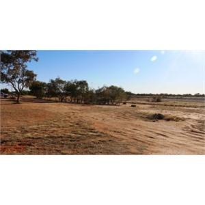 Simpson Desert Oasis Caravan Park unpowered area