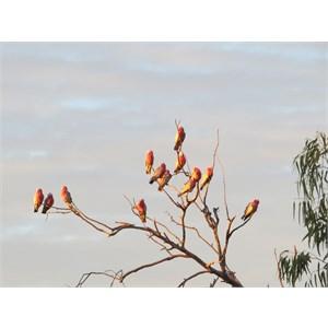 Evening birdshow