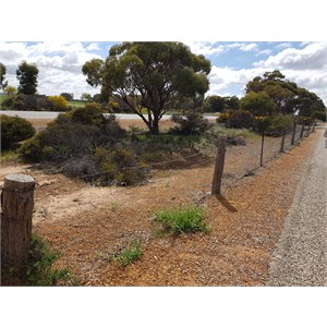 Rabbit Proof Fence Parking Bay