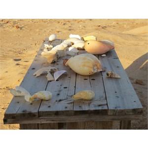 Beach combing catch