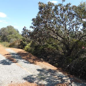 Orange Springs Road - 60 m from intersection