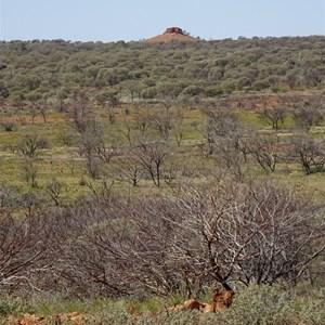 McPherson's Pillar as seen from the ridge near Mulgan Rockhole