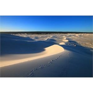 Bilbunya Dunes looking north