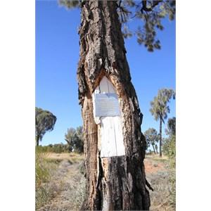 Beadell tree beside the GJR 18km east of Jupiter Well