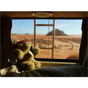 Tambo Teddy loved the view