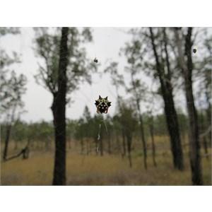 This arachnid along the track
