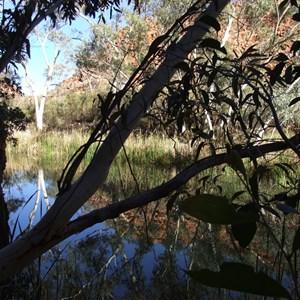 Kangaroo Pool