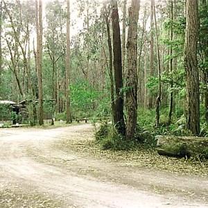 Bemm Rv Rainforest Walk carpark
