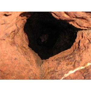 Rockhole