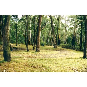 Blue Range Cr campground
