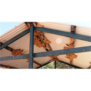 Swallow nests in the picnic shelter