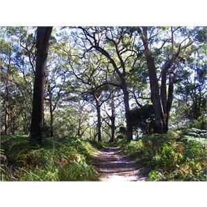 Bushwalking track