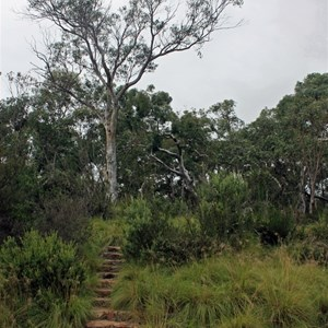 Bombay Reserve, steps to campground from river