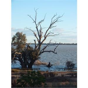 Lake Benanee,NSW