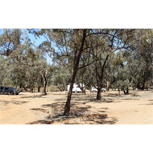 Free camping area beside the Moonee River