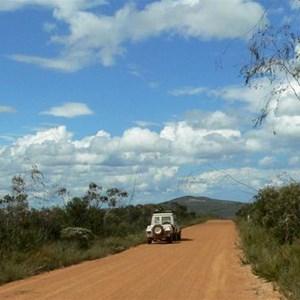Eucalyptus sepulcralis