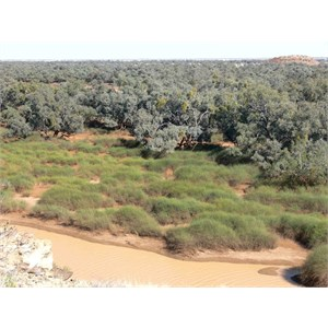 Rounded hummocks of Lignum in Diamantina River, Diamantina Gates, Qld.