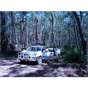 in NSW bush