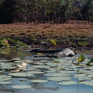 Croc Mary River
